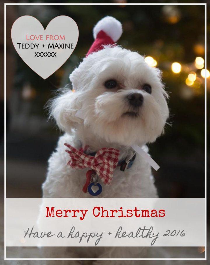 Merry Christmas from interior stylist Maxine Brady