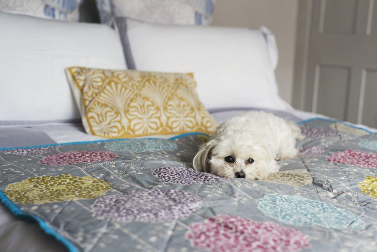 White dog on bed
