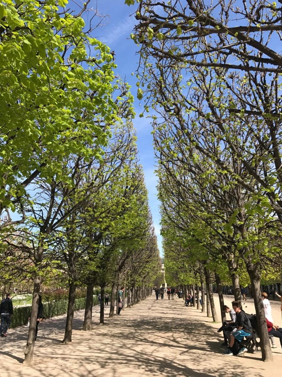 Rows of trees in Paris