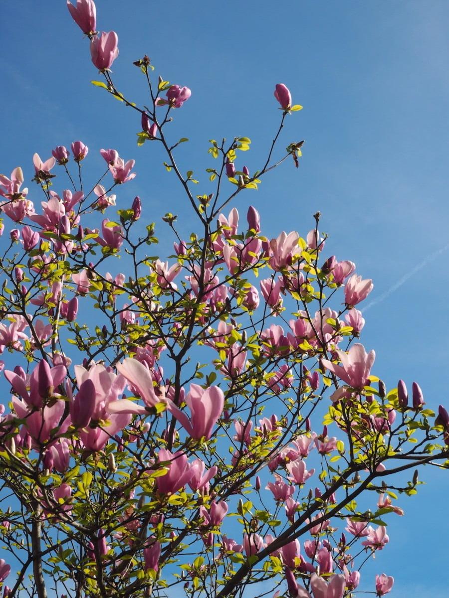 Flowers blooming on trees