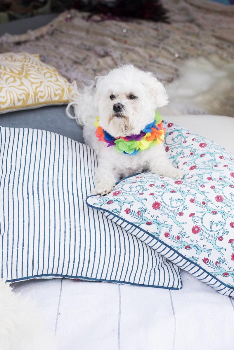 A cute fluffy white dog