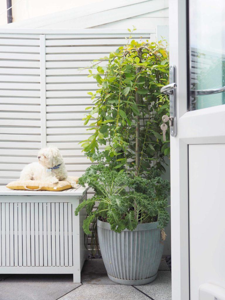 garden table, painted outdoor furniture, english garden. modern fencing