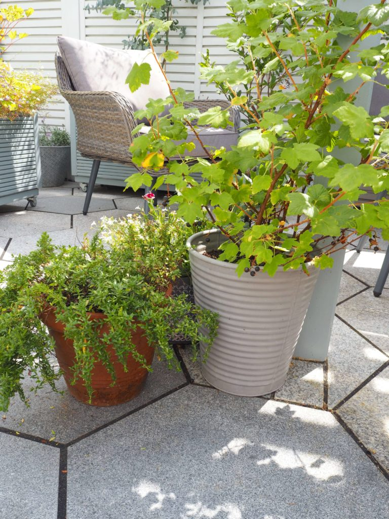 painted outdoor furniture, english garden. modern fencing, pot plants